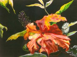 Windblown Hibiscus