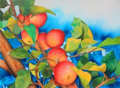 KNN Apples