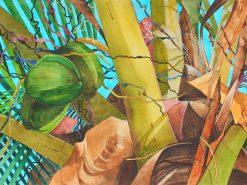 KNN Green Coconuts