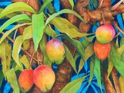 KNN Mangoes