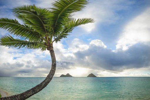 TK Lazy Palm Tree