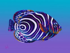 ND Emperor Juvenille Angelfish 17x21