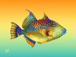 ND Golden Heart Triggerfish