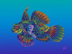 ND Mandarin Dragonette
