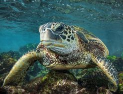 Eye to Eye Turtle Photo by Scott Hareland