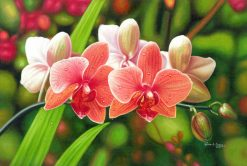 Coral Orchids
