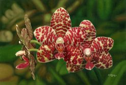 Crimson Spotted Orchid