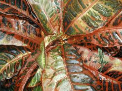 Croton with Gecko
