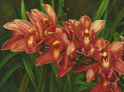 Florida Flamingo Cymbidium