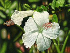 Lucid White Hibiscus