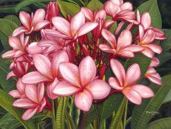 Pink Natural Plumerias