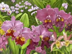 Pink Orchid Fantasia