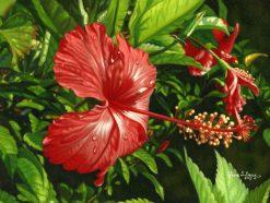 Red Zen Hibiscus