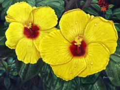 Spectacular Yellow Hibiscus Blooms