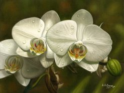 White Christmas Orchid