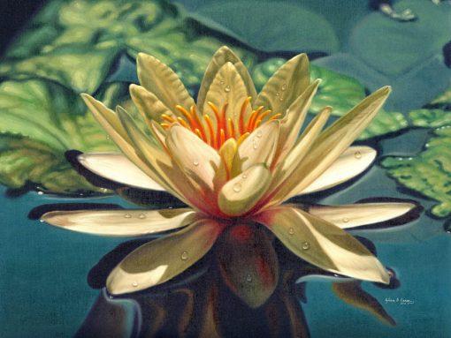White Lotus Dream