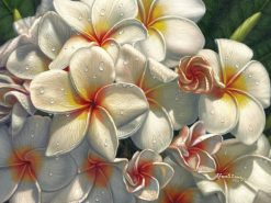 White Plumeria Array