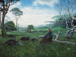 Kahikinui (Wild Turkeys)