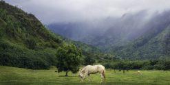 Kauai Ranch