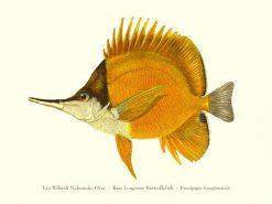 Lau Wiliwili Nukunuku Oi'oi (Rare Longnose Butterflyfish)