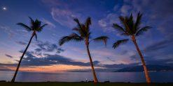 Palms of Paradise