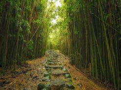 Pipiwai Trail II
