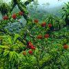 Waikamoi Rainforest Reserve