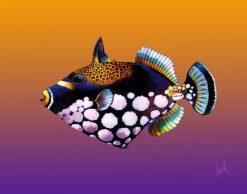 ND Clown Triggerfish