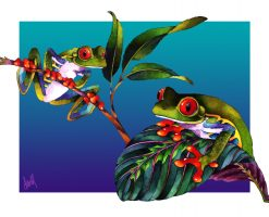 NDV Red Eyed Tree Frogs